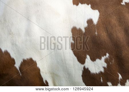 closeup of cowhide on side of red and white cow