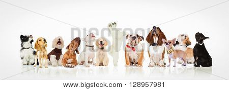 large group of curious dogs and puppies looking up at something on white background