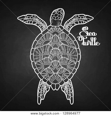 Graphic Hawksbill sea turtle drawn in line art style. Top view. Ocean vector creature isolated on chalkboard