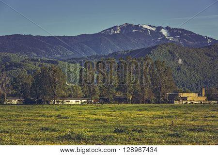 Spring landscape with blooming dandelion field and Postavaru mountain near Brasov Transylvania region Romania.