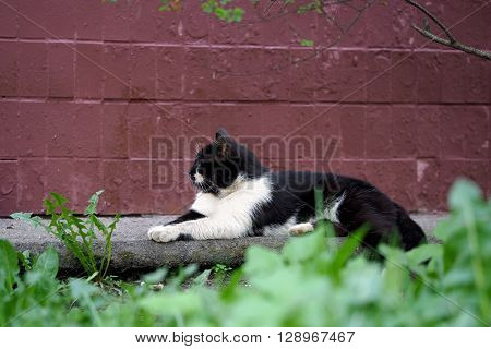 Street cat sitting on the pavement against a wall at home. The cat is black with a white pattern on the face. Sick animals, eyes fester. The concept of the problem of stray animals in the cities.