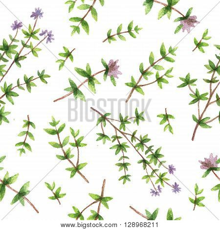 Watercolor seamless pattern hand drawn herb thyme. Watercolor leaves and branches of thyme on a white background. Herbs for packaging design, cards, postcards and book illustrations.