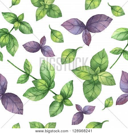 Watercolor seamless pattern hand drawn herb basil . Watercolor leaves and branches of basil on a white background. Herbs for packaging design, cards, postcards and book illustrations.