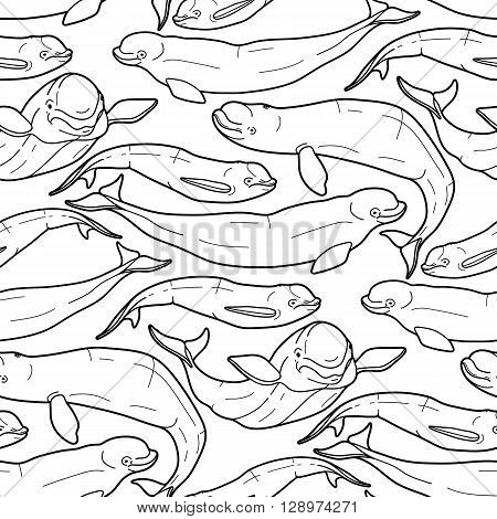 Graphic beluga whale seamless pattern. White whale. Sea creature on white background.  Vector ocean mammal. Coloring book page design for adults and kids