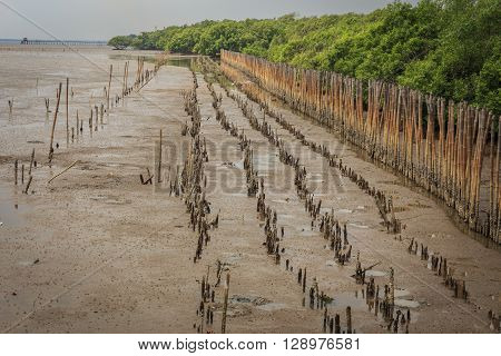 Intertidal forest or mangrove forest at the coast