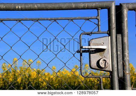 close up of a metal garden gate