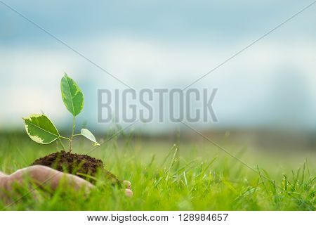 Human Is Holding A Small Green Plant With Soil In Hands Over The Green Grass Background