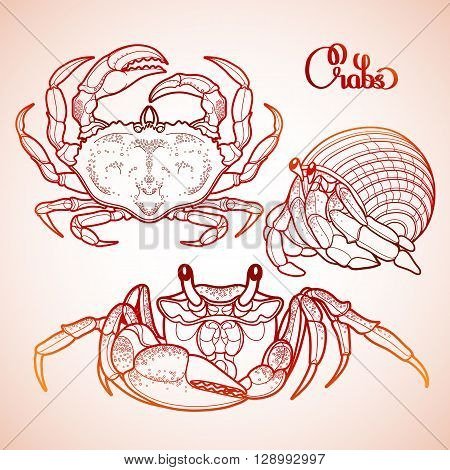 Graphic vector crab collection drawn in line art style. Sea and ocean creature isolated in red colors. Top view. Seafood element. Coloring book page design