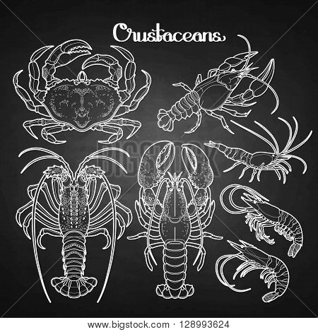 Graphic crustaceans collection drawn in line art style. Sea and ocean creatures isolated on chalkboard