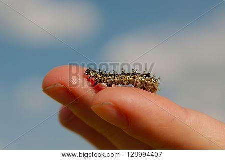Caterpillar crawling on human hand