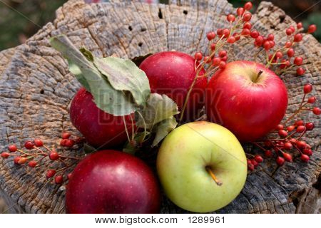 Apples On A Stump