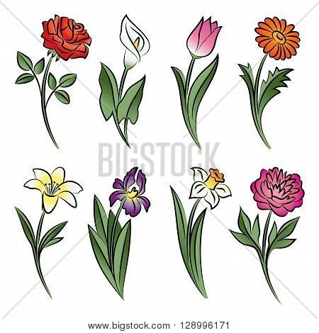 Collection of outlined flowers. Calla rose tulip lily peony narcissus iris and daisy In sketch hand drawn style. Vector illustration