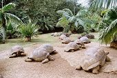 foto of the hare tortoise  - beautiful giant turtles at park of mauritius - JPG