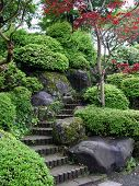 image of maple tree  - japanese garden with stairs and red maple tree - JPG