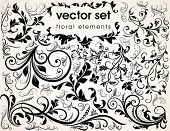 stock photo of floral design  - Floral design elements - JPG