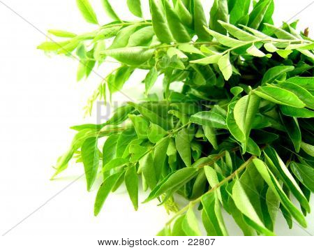 Bright Green Curry Leaves