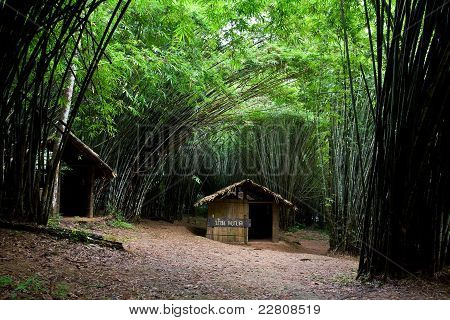 Home At The Bamboo Forest