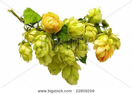 Beautiful Branches Hop