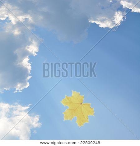 Sky and leaf