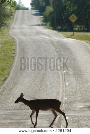 Deer Street