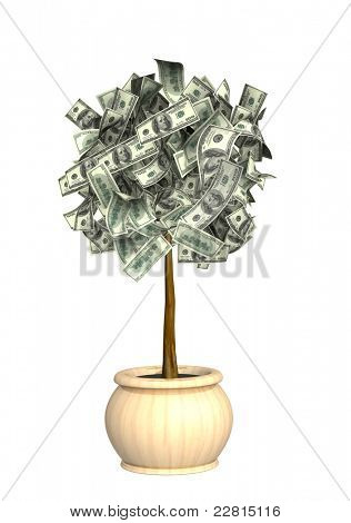 Money tree. Isolated over white