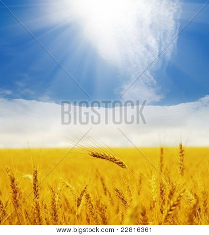 sun over golden field
