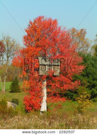 Unusual Tree House With Stunning Fall Foliage