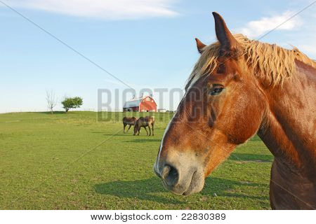 Horses And Barn With Copy Space