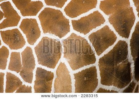 Giraffe Fell Textur