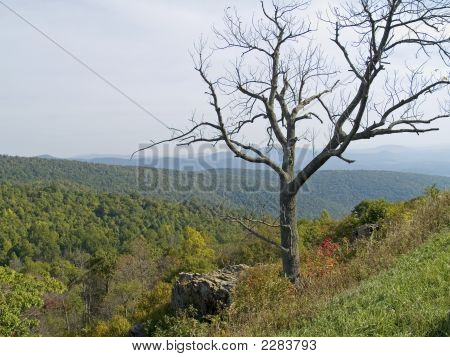Treetop Shenandoah
