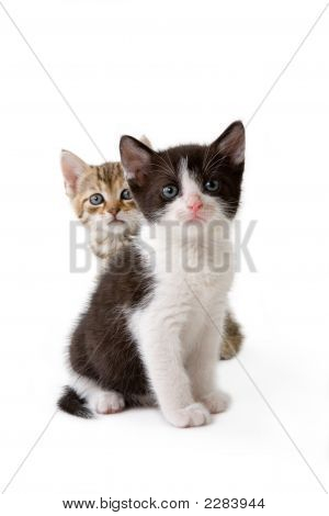 Two Striped Kittens Listening To Something