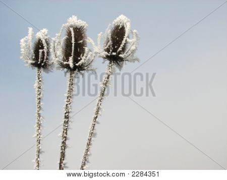 Three Frozen Heads