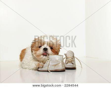 Naughty Puppy
