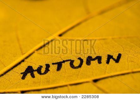 Macro On Autumn Leaf
