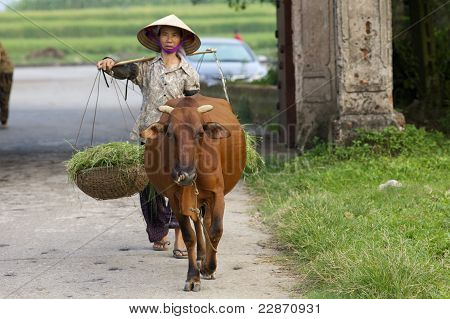 Vietnamese Woman with Water Buffalo