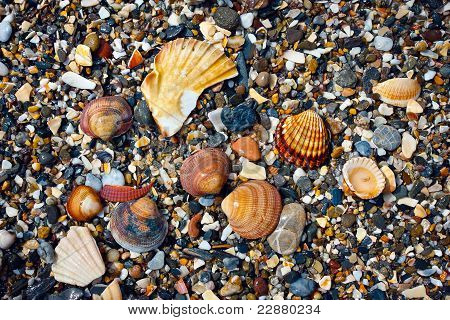 Shells And Shingles