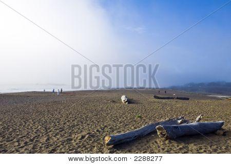 Cambria Fog Bank