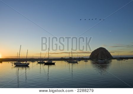 Geese Over Morro Bay Harbor