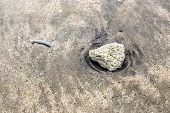 On Bali Sand Indonesia An Ancient Stone With Marks Of Ancient Plants poster