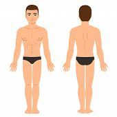 Male Body In Underwear Front And Back View. Athletic Young Man Physique, Vector Clip Art For Medical poster