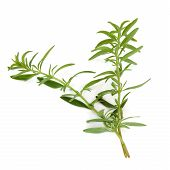 image of hyssop  - Hyssop herb leaf sprigs isolated over white background - JPG