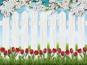 Red Tulip Flowers, Blooming Tree Branch And Grass On White Fence Background. Spring Landscape. poster