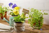 Gardening Tools, Watering Can, Seeds, Plants With Sign Hello Spring On Vintage Wooden Table. Spring  poster