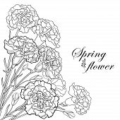 Vector Corner Bouquet With Outline Black Carnation Or Clove Flower, Bud And Leaf Isolated On White B poster