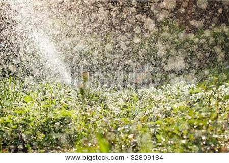 garden watering, huge amount of water drops