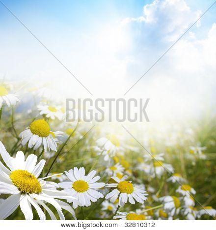 Beautiful summer landscape with daisies