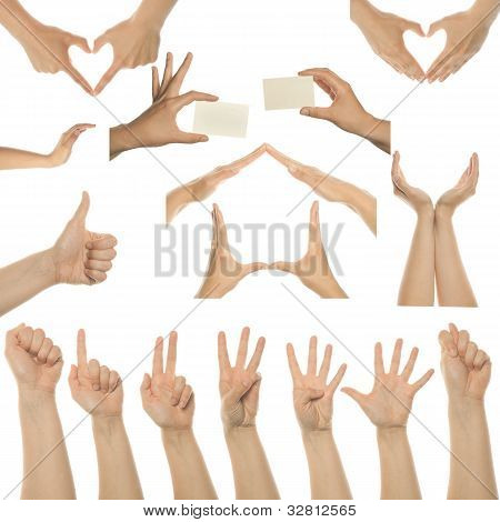 Set Of Many Different Hands