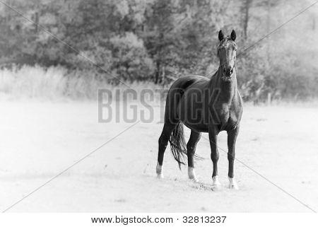 Black Horse Single