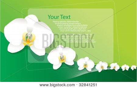 White Orchid Background