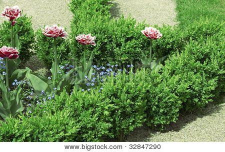 Geometrical Flower Bed